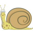 snail home vector image vector image