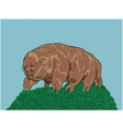 Tardigrade or water bear