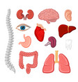 human organ isolated icon set for anatomy design vector image