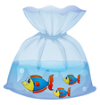 A plastic pouch with three fishes vector image vector image