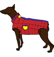 brown doberman dog in a red jacket vector image