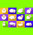 sheep icons set flat style vector image