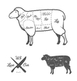 american cuts lamb or mutton diagram vector image vector image
