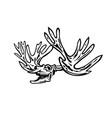caribou or reindeer skull skeleton roaring side vector image vector image