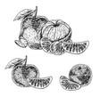 hand drawn set of mandarin sketch vector image vector image