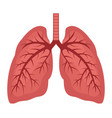 human lungs flat icon vector image vector image