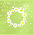 wreath of white chamomiles vector image vector image