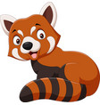 cartoon smiling red panda on white background vector image vector image