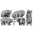 grizzly bear set collection hunting brown wild vector image vector image