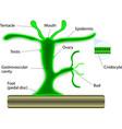 Hydra vector image vector image