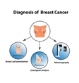 Methods of diagnosis of breast cancer Mammography vector image vector image