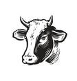 cow head portrait logo dairy products beef vector image vector image