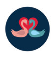 flat couple of swans in love on white background vector image