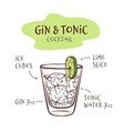 gin and tonic cocktail vector image vector image
