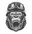 head of gorilla vector image vector image