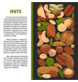 nuts nutrition information poster of raw vector image vector image