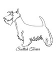scottish terrier dog coloring vector image vector image
