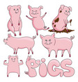 set cute pigs vector image vector image