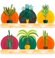 Tropical plants Set of flat potted houseplants vector image