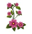 beautiful ornamental flowers vector image vector image