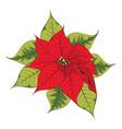 christmas star flower vector image vector image