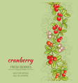cranberry background vector image