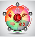 infographics with fetus on colorful diagram and vector image vector image