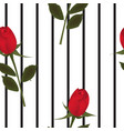 red rose on stripped background vector image vector image