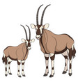 set of color with oryx antelope