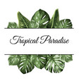 tropical paradise top bottom frame exotic jungle vector image vector image