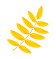 yellow rowan leaf icon flat style vector image vector image