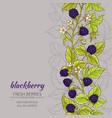 blackberry background vector image