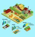 isometric farm infographic concept vector image