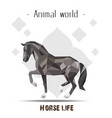animal world horse life polygon horse flower backg vector image