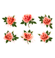 beautiful set pink ornate roses with leaves vector image vector image