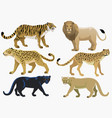 big cats bundle set vector image