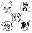 dog hand drawn dog portraits vector image