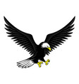 flying bald eagle icon vector image