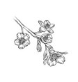 blooming flower branch monochrome sketch hand vector image