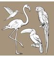 exotic tropical birds - flamingo macaw vector image vector image