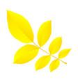 yellow autumn leaf icon flat style vector image