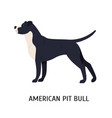 american pit bull terrier large smart catch dog vector image