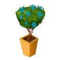bonsai with blue flowers isolated on white vector image vector image