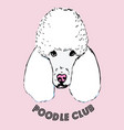 poodle head isolated on pink background vector image vector image