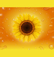 realistic sunflower on yellow background vector image vector image