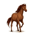 Running horse sketch with brown arabian stallion vector image vector image