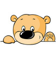 cute teddy bear peeking out from behind white vector image vector image