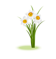 Daffodill white vector image vector image