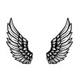 hand drawn eagle wings isolated on white vector image vector image