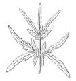 leaf of heracleum setosum vintage vector image vector image